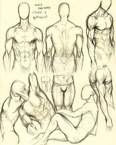 Male Anatomy Study 1 by 0ImagInc0.deviantart.com on @deviantART