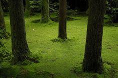 Ryoanji moss garden. Love the green.