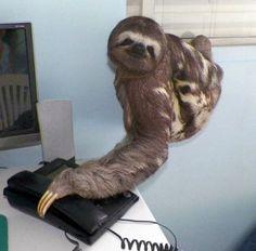 Sloth secretary via Imgur