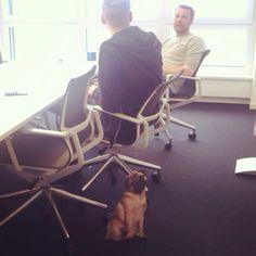 Hank ist der Mops für alle Fälle. Immer auf Zack und dabei bestens gelaunt – einfach der perfekte Bürohund! Hol dir auch die tolle Deko Hunde! Egal ob als Aufsteller oder Wanddeko – diese Tiere bereichern jedes Büro.
