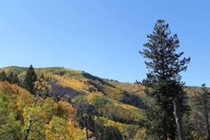 A fall fact from Naturalist, Jackie at The Ritz-Carlton, Bachelor Gulch: the trees in each grove of Aspens, which generally peak towards the end of September, are usually identical and have the same chemical composition, thus they will change at the same time to the same color. The different groves form a gorgeous living mosaic of green, gold, and even red leaves.