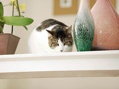 Urination and defecation outside the litter box is the most common feline behavior problem, learn how to help.