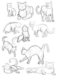 New Ideas Cats Art Drawing Sketches Cat Reference, Drawing Reference Poses, Drawing Ideas, Drawing Tips, Drawing Hair, Gesture Drawing Poses, Anatomy Reference, Drawing Body Poses, Art Inspiration Drawing