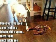 once you have seen a dog fighting a lobster with a spoon there is not much left to see.