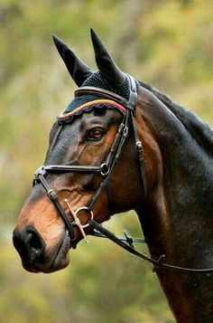 Hickstead~ I had the pleasure of seeing him jump almost every summer when i was younger... an amazing horse