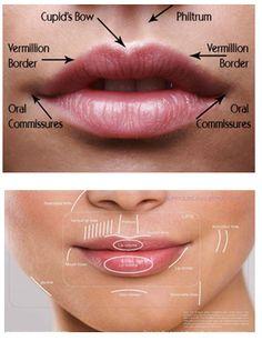 4 Times You Should Avoid Botox Facial Anatomy, Head Anatomy, Botox Fillers, Lip Fillers, Relleno Facial, Facial Proportions, Mouth Drawing, Facial Aesthetics, Lip Augmentation