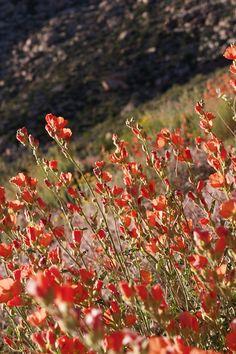 The desert blooms, too - Photo by Tiffannie Bond