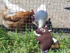 Funky Sunday: Des nouvelles des doudous: Mon P'tit Loup découvre la vie à la ferme