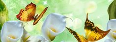 To present flowers or pictures of flowers online is most likely the most ideal approach to show gratefulness and assumption on account of the numerous Zantedeschia Aethiopica, Calla Lily, Cala Lilies, Butterfly Wallpaper, Flowers Online, Flower Pictures, Cool Photos, Make It Yourself, Christmas Ornaments