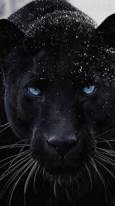 If life just threw you some struggles. You just leveled up. Majestic Animals, Rare Animals, Cute Baby Animals, Animals And Pets, Funny Animals, Jaguar Wallpaper, Wild Animal Wallpaper, Tier Wallpaper, Beautiful Cats
