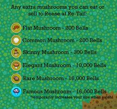 Mushrooms Guide