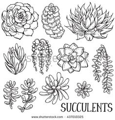 311 Best Plant Drawing images in 2019 | Doodles, Needlepoint