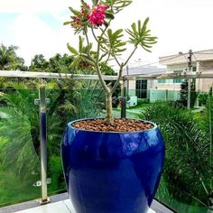 Vaso Vietnamita: +68 Modelos Grandes e Lindos Para Usar na Decoração Blue Garden, Garden Pots, Vasos Vintage, Luxury Staircase, Garden Makeover, Flower Nursery, Front Yard Landscaping, Pottery Art, Beautiful Gardens