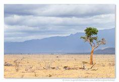 Leven in het droge landschap van Tsavo East, Kenia. Door communitylid IngridVekemans - NG FotoCommunity © Upload zelf je mooiste foto's op www.nationalgeographic.nl/gebruiker/fotografie/foto/toevoegen