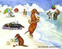 Dog Beach :)
