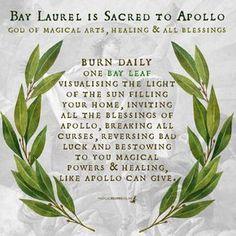 Hoodoo Spells, Magick Spells, Jar Spells, Wicca Witchcraft, Magic Herbs, Herbal Magic, Plant Magic, Burning Bay Leaves, Tarot