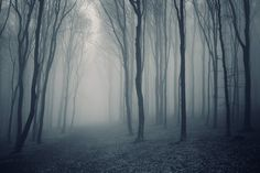 Grey Mist Forest Mural Wallpaper, custom made to suit your wall size by the UK's No.1 for wall murals. Custom design service and express delivery available.