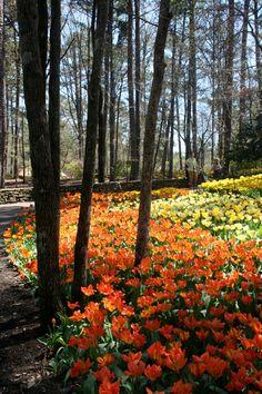 Garvan woodland gardens hot springs arkansas go during the tulip garvan woodland gardens hot springs arkansas go during the tulip extravaganza absolutely breathtaking garvan woodland gardens hot springs ar mightylinksfo