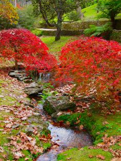 The Everglades Garden, Leura, Blue Mountains, NSW, Australia