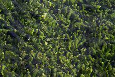 Lake Taupo | © Elyse Childs Photography New Zealand Lakes, Herbs, Island, Plants, Photography, Photograph, Herb, Islands, Photo Shoot