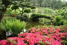 """Résultat de recherche d'images pour """"jardin japonais"""""""