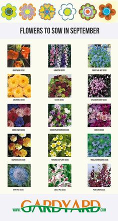 Month by Month Flower Seed Sowing Guide