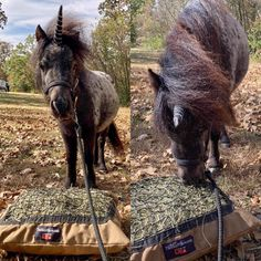 Unicorns love the #HayPillow too! 🦄 Hay Feeder For Horses, Horse Hay, Slow Feeder, Feed Bags, Livestock, Unicorns, Miniatures, Pillows, Nature