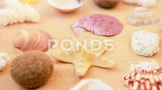 Shells on the beach.  #beach #background #shell #sand #sea #ocean #resort #sun #tourism #water #calm #tranquil #object #conch #sky #relax #lagoon #relaxation #sunlight #travel #paradise #sunshine #climate #outdoors #marine #cockleshell #seashore #seashell #idyllic #exotic #aquatic #coast #tropical #copy #holiday #pacific #blue #vacations #seascape #nature #coastline #landscape #space #pearls #jewelry #star #day #sunny #summer