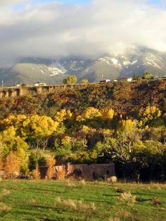 New Mexico Shade Trees