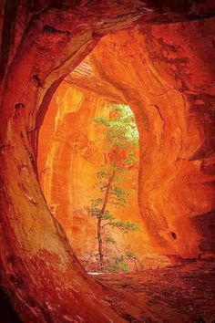 Boynton Canyon,Arizona
