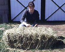 An expert explains the nutrients loss that can happen in hay over time.