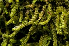 bryology 101 | Ohio Moss and Lichen Association