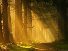 Sun Ray Forest, The Netherlands ...