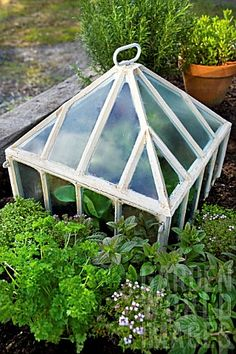 Quality Horticultural Images and Plant and Garden Photos Picture Library with over 2 Million Images! Potager Garden, Herb Garden, Garden Art, Vegetable Garden, Garden Design, Garden Ideas, Garden Tools, Mini Greenhouse, Miniature Greenhouse
