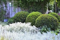 silver and boxwood