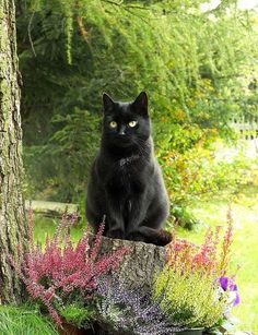 black cat on a stump - Tap the link now to see all of our cool cat collections!