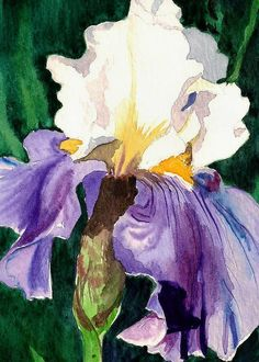 Shop for iris art from the world's greatest living artists. All iris artwork ships within 48 hours and includes a money-back guarantee. Choose your favorite iris designs and purchase them as wall art, home decor, phone cases, tote bags, and more! Irises, Watercolor Flowers, Watercolor Paintings, Flower Paintings, Watercolors, Iris Art, Iris Painting, White Iris, Purple Iris