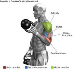 BICEPS -  ALTERNATE CURL HAMMER KETTLEBELL