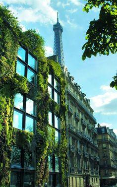 Patrick Blanc Vertical Garden, Paris