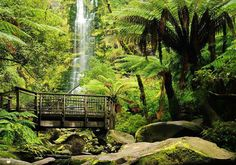 Take a walk on the wild side and fall in love with Lorne's surroundings. #lorne #lovelorne #otwaynationalpark #greatoceanroad #green #nature #travel #ferns #waterfall #igersmelbourne #picoftheday #explorevictoria #seeaustralia #lornewaterfall #lovelorne #hikes #lornehike #visitlorne by cumberlandlorne