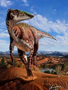 Djadochta Hadrosaur. Cover of a forthcoming book, Hadrosaurs. Art by Julius Csotonyi