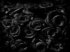 black roses - Google Search