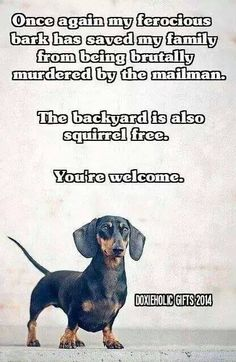 Doxies are the best!