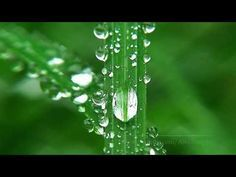 Wow!! This sure is one super super relaxing video!! I just loved it!! It comes relaxing nature sounds like birds sound with pictures of greenery and dew!! Oh, and they both just relax you and bring your mind to a stop and relaxes it. You'll just love it!! I did!! It complete relaxed my mind!! Wow!! Loved it so so very very much!! Hope you do too!! I really really hope you do!! :))