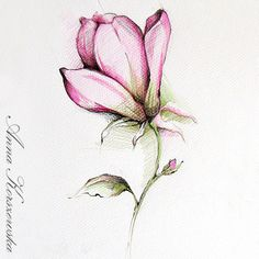 Pink Magnolia  subtle drawing by AnnaKorszewska on Etsy, $40.00
