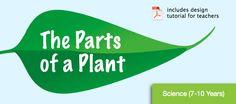 Download science lesson The Parts of a Plant from MimioConnect.com! http://www.mimioconnect.com/content/lesson/17428/parts_plant_revised#