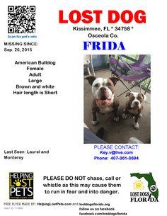 Lost Dog - American Bulldog - Kissimmee, FL, United States