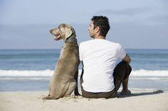 M Por qué los perros se parecen a sus dueños. ¿O es al revés? Perros