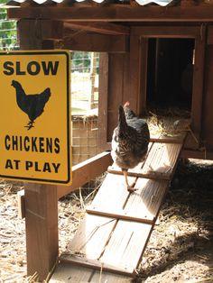 Urban Backyard Chicken Coops : HGTVGardens --- ATL!!!!