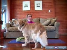 Video: Introduction to Doga, Yoga Moves With Your Dog | eHow